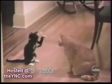 Smieszne koty i Śmieszne psy:)