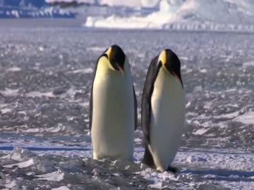 Porażki pingwinów