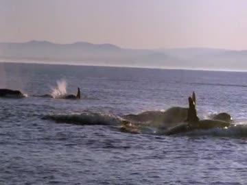 Uwolnić orkę 4 - online (2010) Lektor PL