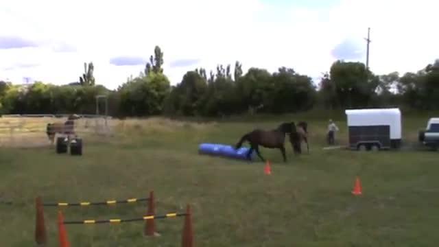 Najlepiej wytresowane konie na świecie