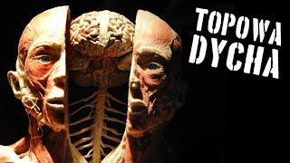 10 tajemnic ludzkiego ciała [TOPOWA DYCHA]