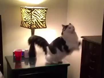 Kotek kładzie się do swojego łóżeczka z maskotką