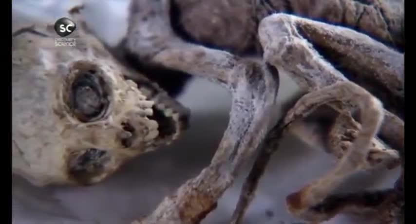 Mumia nie z tej ziemi - Alien Mummies