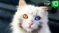 Przedstawiam wam listę najpiękniejszych sławnych kotów, niektóre mają więcej fanów na instagramie niż niejeden celebryta :) Daj łapkę w górę jeśli moje odcinki się podobają :* Subskrybuj, żeby śledzić nowości  lista kotków: 10. Muta 9. Venus  8. Snoopy Babe 7. Smoothie 6. Alice 5. Aurora 4. Thor 3. Alos 2. Iriss i Abyss 1. Coby  ======================================= SUBSKRYBUJ KANAŁ ŻEBY ŚLEDZIĆ NOWOŚCI: ► https://youtube.com/spinkafun?sub_confirmation=1 ◄ =======================================  Facebook: ► https://www.facebook.com/spinkafun/ ◄ Youtube: ► https://www.youtube.com/spinkafun/ ◄ Twitter: ► https://twitter.com/spinkafun ◄ Google+: ► https://plus.google.com/+Spinkafun ◄ Grupa FB ► https://www.facebook.com/groups/640598269429754/ ◄  Zobacz też inne filmy: #spinkafun Top 10   Najstarszych rzeczy świata   SpinkaFun ➥https://www.youtube.com/watch?v=gT6l0UUAias Top 10   Najszybszych policyjnych samochodów świata   SpinkaFun ➥https://www.youtube.com/watch?v=VoNZNvxcbMM Szybkie Fakty   Czy wiesz, że...? ➥https://www.youtube.com/watch?v=SPPnODUaBLI Top 10   Największych kotów domowych   SpinkaFun ➥https://www.youtube.com/watch?v=eKUBcHT207E Top 10   Najlepszych Ciekawostek o Strefie 51   SpinkaFun ➥https://www.youtube.com/watch?v=-qQI6AHPb0A Top 10   Najniebezpieczniejszych dróg świata   SpinkaFun ➥https://www.youtube.com/watch?v=Z_joq9yZohI Top 10   Faktów o kotach, których mogłeś nie wiedzieć ➥https://www.youtube.com/watch?v=jIGH0kc88hA Top 10   Faktów o psach, których mogłeś nie wiedzieć ➥https://www.youtube.com/watch?v=kxcwLYI0MLQ Top 10   Największych owadów świata ➥https://www.youtube.com/watch?v=NVGebEivOwc Top 10   Najdziwniejszych Japońskich Teleturniejów ➥https://www.youtube.com/watch?v=6riQdW13nWo 5   Psów, które uratowały życie swoich właścicieli ➥https://www.youtube.com/watch?v=zA0zLCkxRac Top 10   Najmniejszych psów świata ➥https://www.youtube.com/watch?v=kcAt2Pmamnw Top 5   Największych psów Świata ➥https://www.youtube.com/watch?v=AgTcDed_Td0 To
